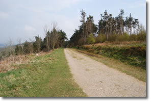 Cleveland Way joins forest track